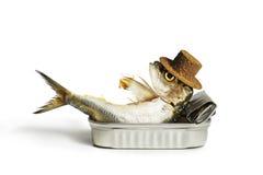 变冷的沙丁鱼  免版税库存图片
