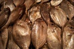 变冷的鱼 免版税库存照片