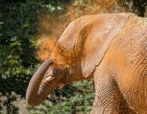 变冷静与沙子的大象 库存图片