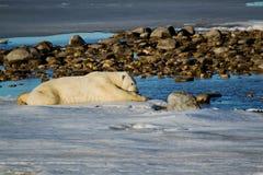 变冷静通过放置的熊在冰 库存图片