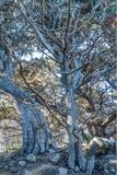 变化增光加利福尼亚沿海风景  免版税库存照片