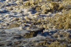 变化懒惰渔 在Grumeti河的尼罗鳄鱼 坦桑尼亚,非洲 库存照片