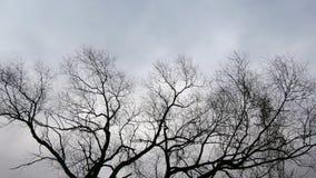 变干的树在冬天 股票录像
