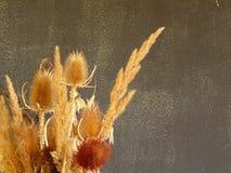 变干的植物 免版税图库摄影