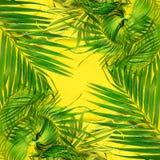 变异热带棕榈叶黄色舱内甲板位置 库存图片