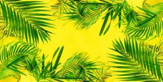 变异热带棕榈叶黄色舱内甲板位置 免版税图库摄影