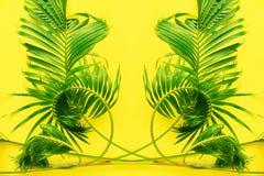 变异热带棕榈叶黄色舱内甲板位置 库存照片