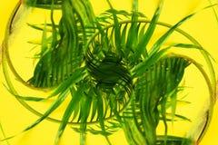 变异热带棕榈叶黄色舱内甲板位置 免版税库存图片