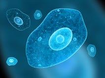 变形虫细胞 皇族释放例证