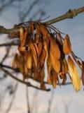 变成灰烬种子结构树 库存照片