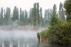 变朦胧在湖,在池塘的早晨薄雾 库存图片