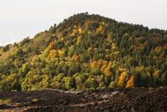 变硬的熔岩和小植被采取的特写镜头 免版税库存图片