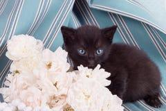 变粉红色与逗人喜爱的小猫的一朵白色玫瑰 免版税库存图片