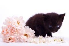 变粉红色与黑逗人喜爱的小猫的一朵白色玫瑰 免版税库存照片