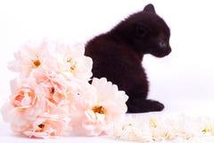 变粉红色与黑逗人喜爱的小猫的一朵白色玫瑰 免版税库存图片