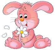 变粉红色兔子 库存图片