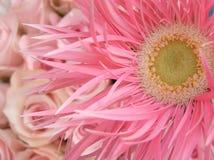 变粉红色甜点 库存照片