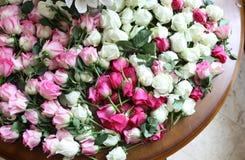 变粉红色白玫瑰 库存照片
