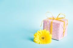 变粉红色被加点的礼物盒和一朵黄色大丁草花在蓝色背景 库存图片