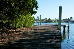 变老在码头种植木 库存照片