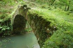 变老的桥梁结构树vega 免版税库存照片