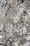 变老的石头 免版税库存图片