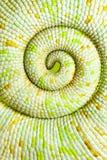变色蜥蜴尾标 免版税库存图片