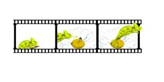 变色蜥蜴故事 免版税库存图片