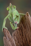 变色蜥蜴木头 免版税库存照片