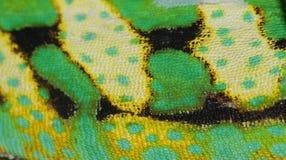 变色蜥蜴皮肤 免版税图库摄影