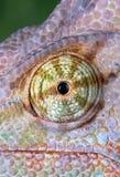 变色蜥蜴眼睛 免版税图库摄影