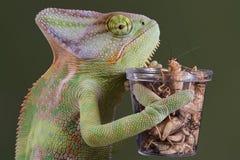 变色蜥蜴蟋蟀午餐 免版税库存照片