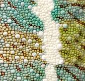变色蜥蜴详细资料豹皮肤 免版税库存照片