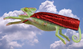 变色蜥蜴超级英雄 免版税库存图片
