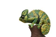 变色蜥蜴雕象 库存图片