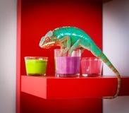 变色蜥蜴和蜡烛在红色背景 免版税库存照片