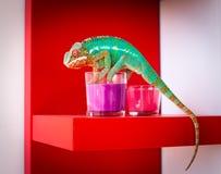 变色蜥蜴和蜡烛 图库摄影