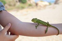 变色蜥蜴在手边 库存照片