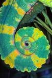 变色蜥蜴尾巴 库存照片