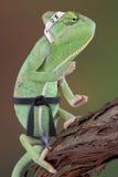 变色蜥蜴空手道孩子 库存照片