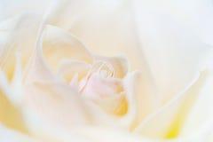 变苍白玫瑰色 库存照片