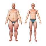 变薄减重变革的人油脂 向量例证