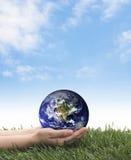 变褐环境叶子去去的绿色拥抱本质说明说法口号文本结构树的包括的日地球 免版税库存照片