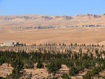 叙利亚。沙漠。 库存照片