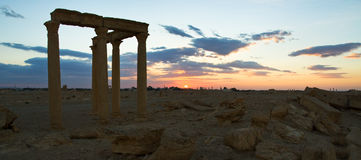 叙利亚 扇叶树头榈 免版税库存图片