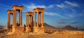 叙利亚 扇叶树头榈 库存照片