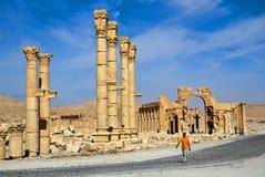叙利亚 扇叶树头榈 库存图片