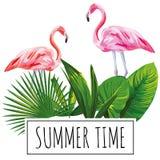 口号夏时热带叶子火鸟白色背景 图库摄影
