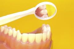 口头的健康 免版税库存图片