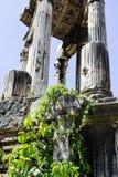古典罗马寺庙废墟长满与藤离开 免版税库存照片